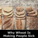 Why Wheat Is Making People Sick